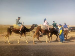 Family Camel Ride in Agafay Desert