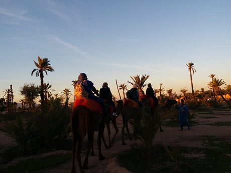 Sunset Camel Ride in Marrakech