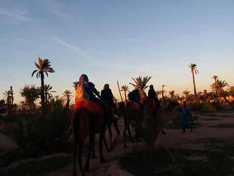 Sunset Camel Ride in Marrakech