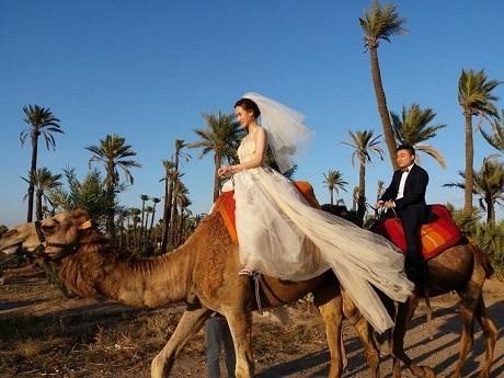 Marrakech Camel Ride in the Palmeraie