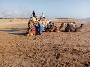 camel riding in Essaouira beach