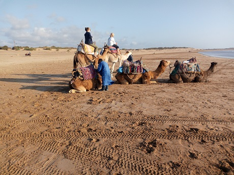 camel riding in Essaouira beach