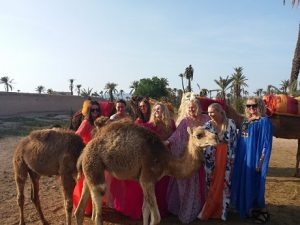 marrakech camel ride in the palm grove