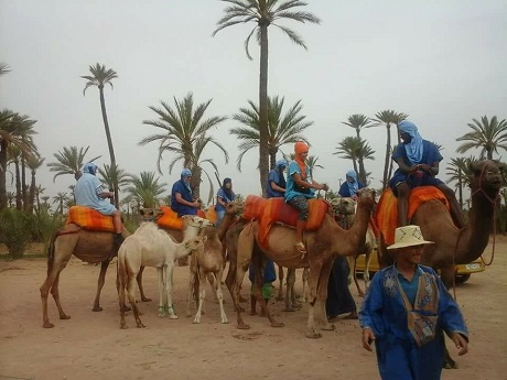 marrakech camel ride in the palmeraie