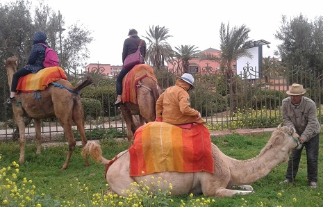 Camel Ride in Menara Gardens