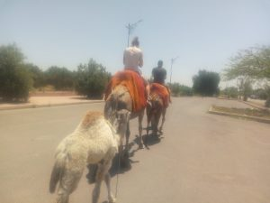 Menara Gardens Camel Ride