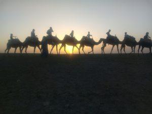 sunset camel ride in Agafay desert
