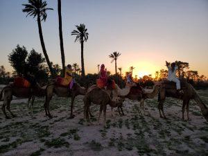 Cheap Camel Ride Marrakech