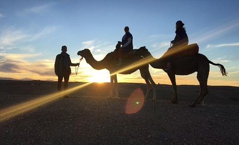 Camel ride Excursions Marrakech