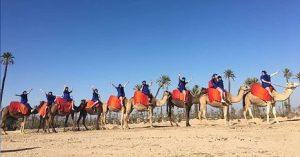 camel ride palmeraie marrakech