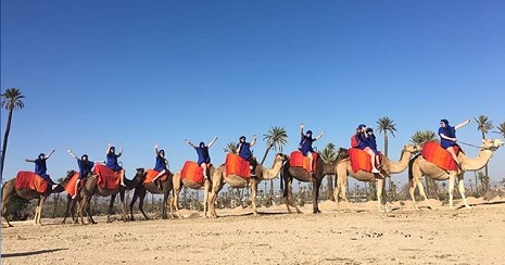 Camel Excursions Marrakech